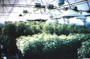 Agro-Facility in operation